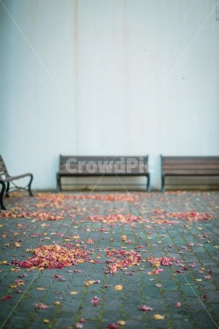 벤치, 가을, 단풍, 낙엽, 가을분위기