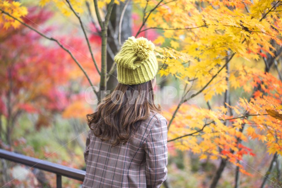 단풍, 낙엽, 가을, 단풍잎, 단풍놀이
