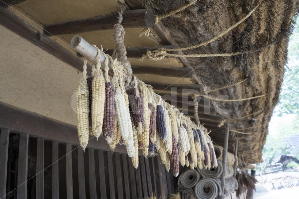 전통, 집, 옥수수, 민속촌, 볏짚