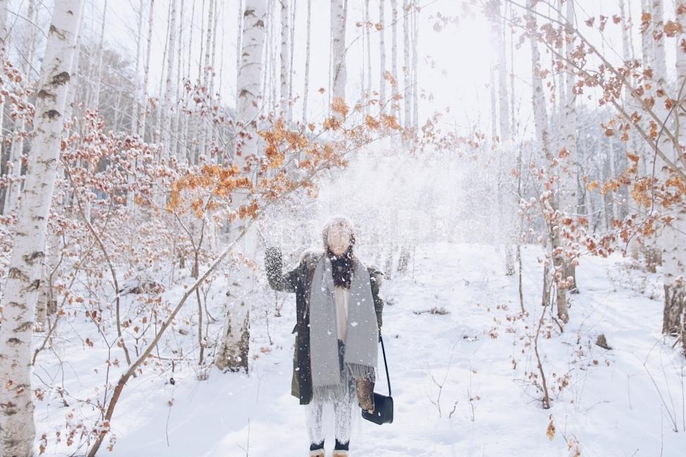 인제, 자작나무숲, 겨울, 산, 계절