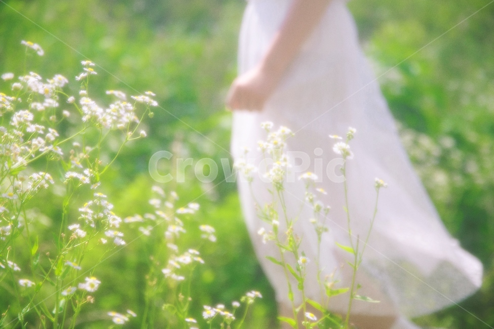 결혼, 봄, 소녀, 꽃, 원피스