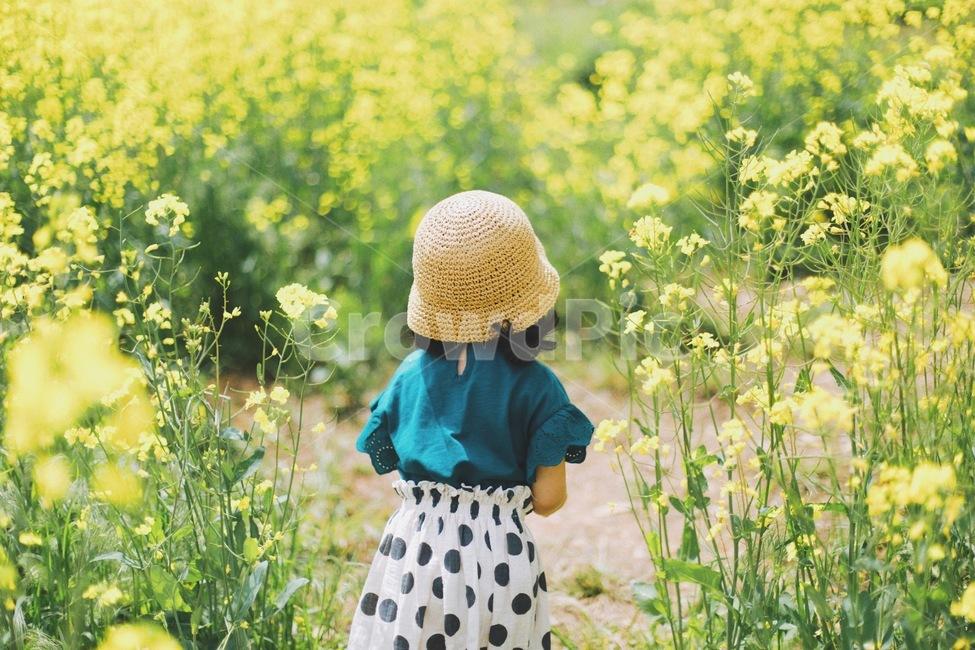 유채꽃, 노란색, 느낌, 색감, 필름