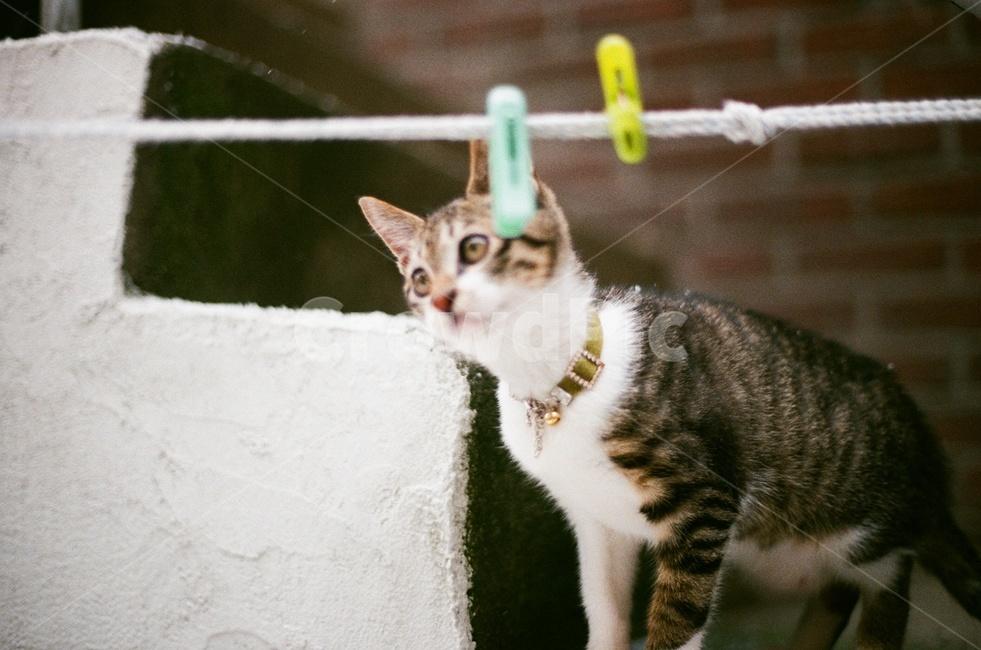 고양이, 반려묘, 겨울, 동물, 감성사진