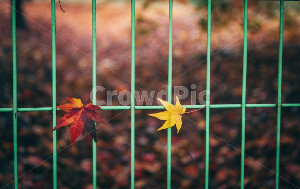 가을, 수목원, 감성사진, 가을길, 단풍