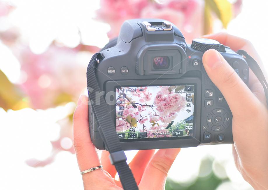 벚꽃, 봄, 축제, blossoms, 꽃