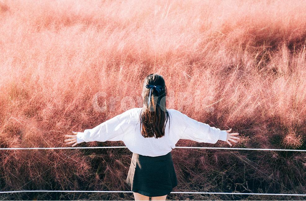 양주, 나리공원, 핑크뮬리, 꽃, portrait
