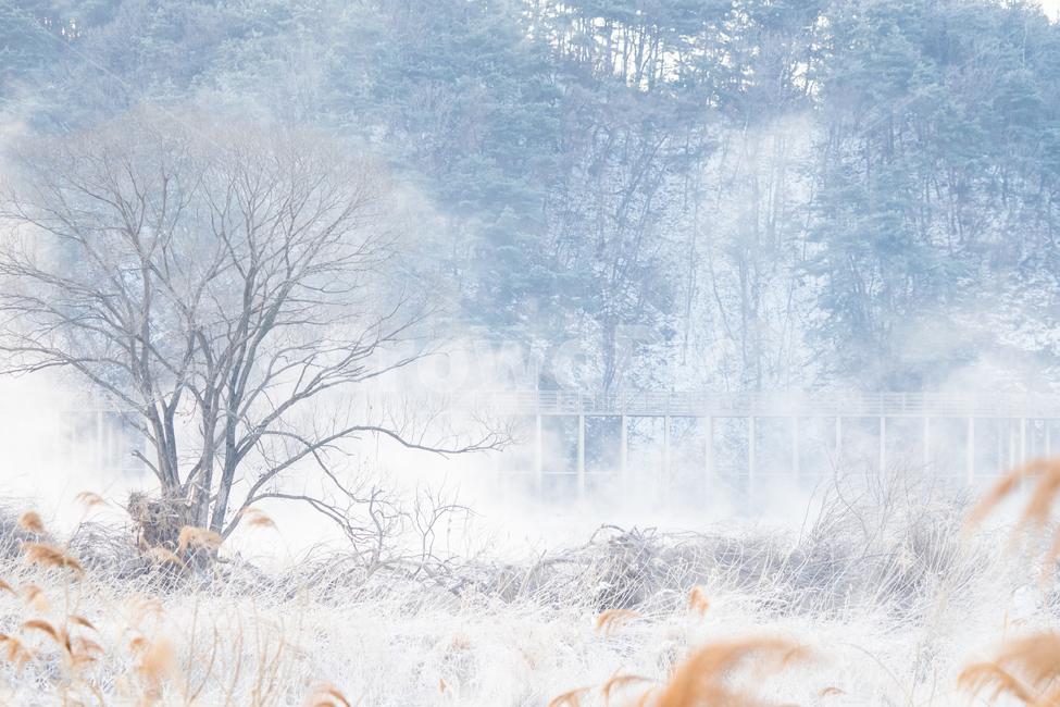 상고대, 물안개, 연무, 겨울, 추위