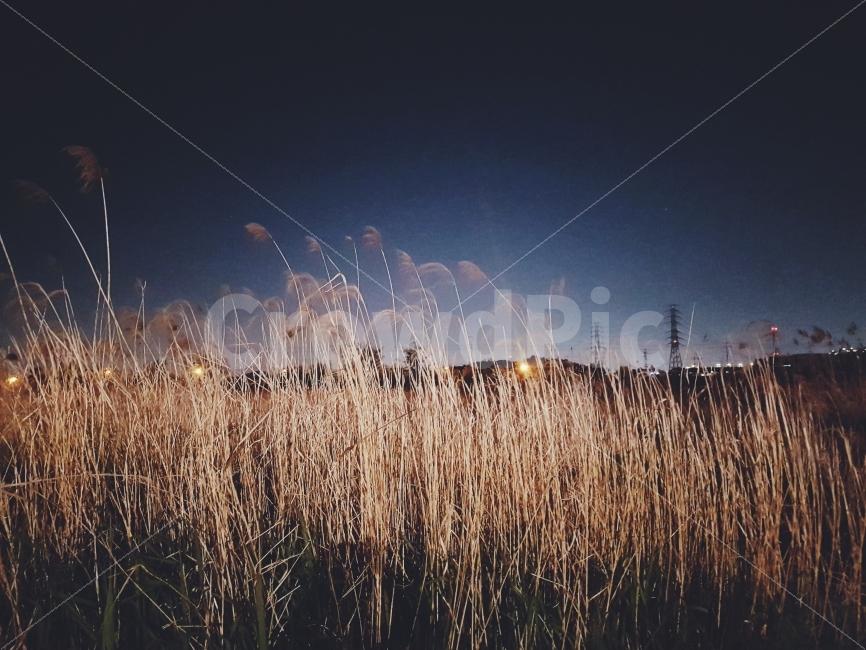 밤, 감성, 갈대, 풍경, 야경
