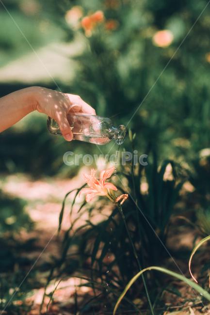 초여름, 봄, 여름, 여름꽃, 주황색꽃