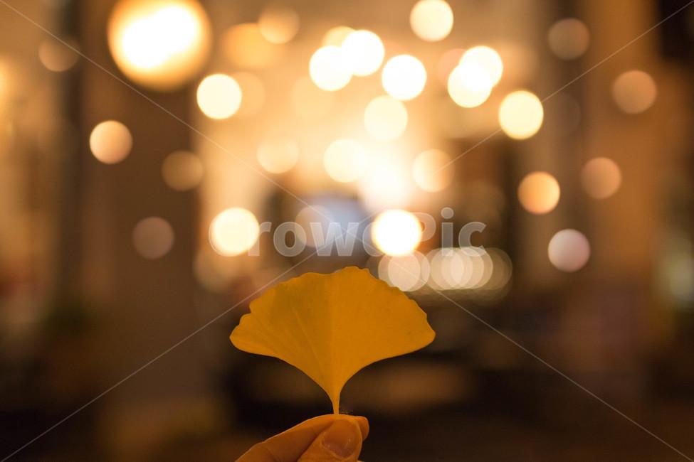 은행잎, 가을풍경, 가을, 보케, 가을밤