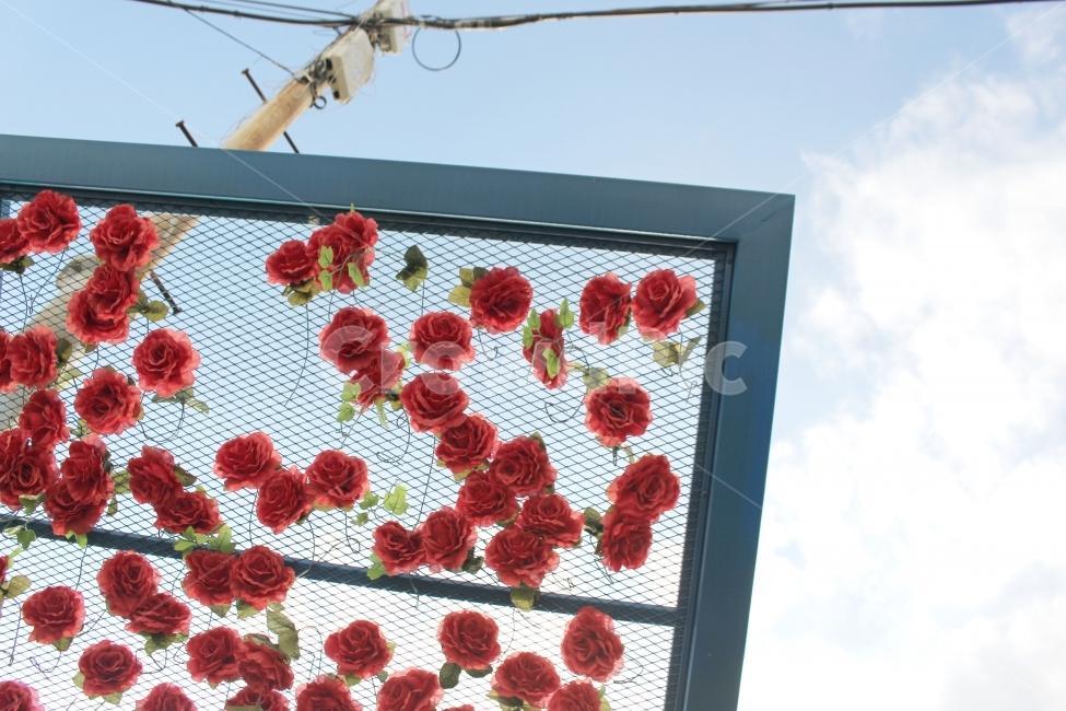 장미, 하늘, 꽃, 감성, 햇살