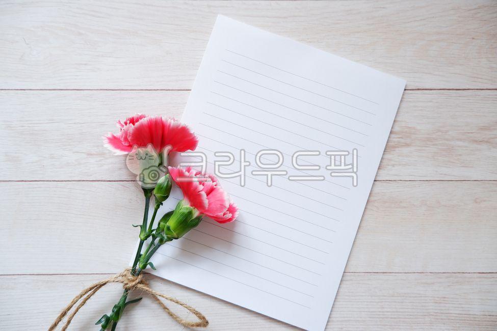 카네이션, 카네이션배경, 핑크카네이션, 카드, 편지지