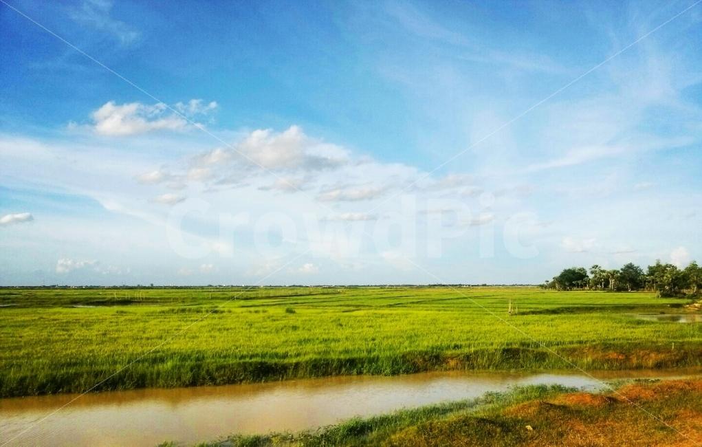 푸른, 하늘, 구름, 초원, 맑음