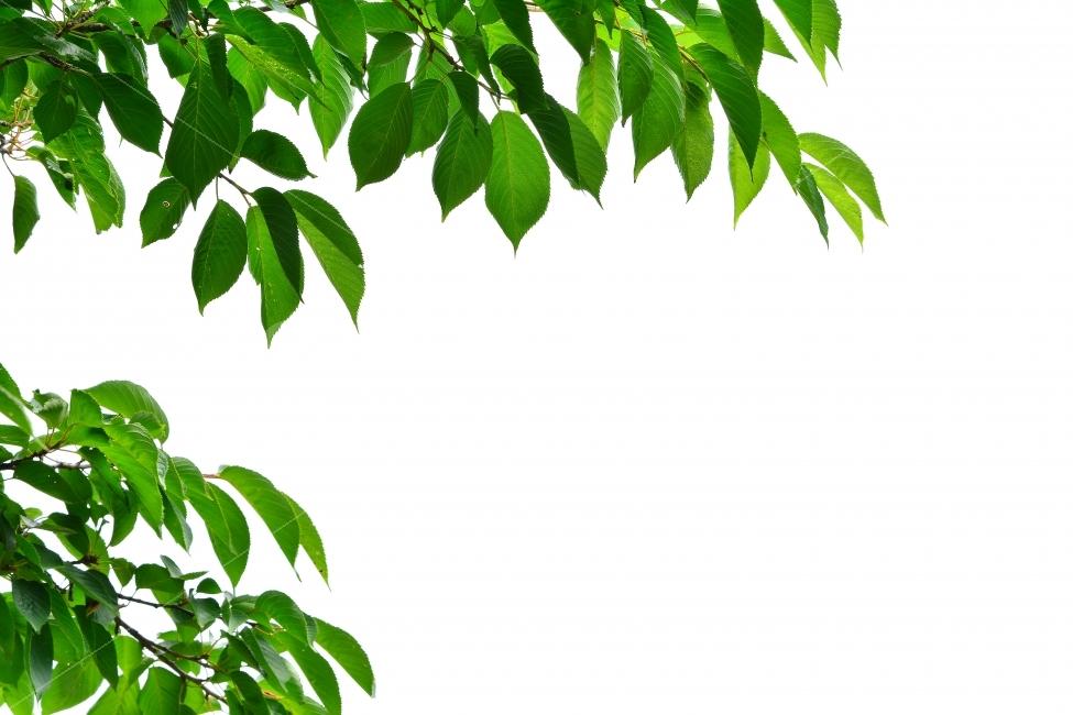나뭇잎, 잎새, 누끼, 그린, 초록