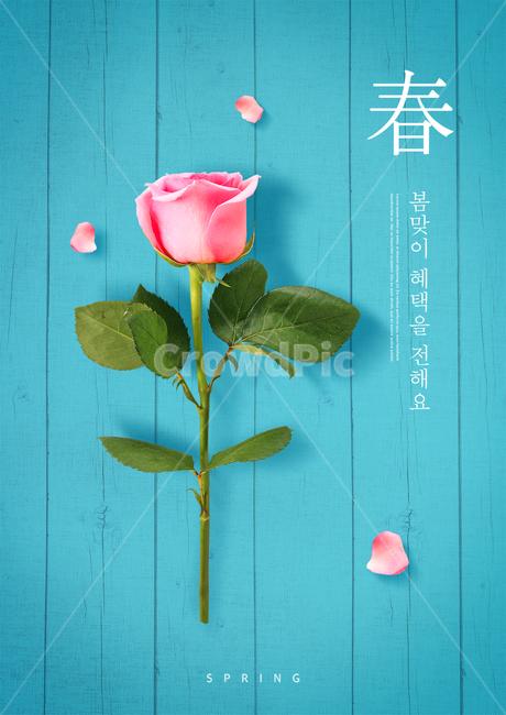 장미, 꽃잎, 봄, 쇼핑, 꽃