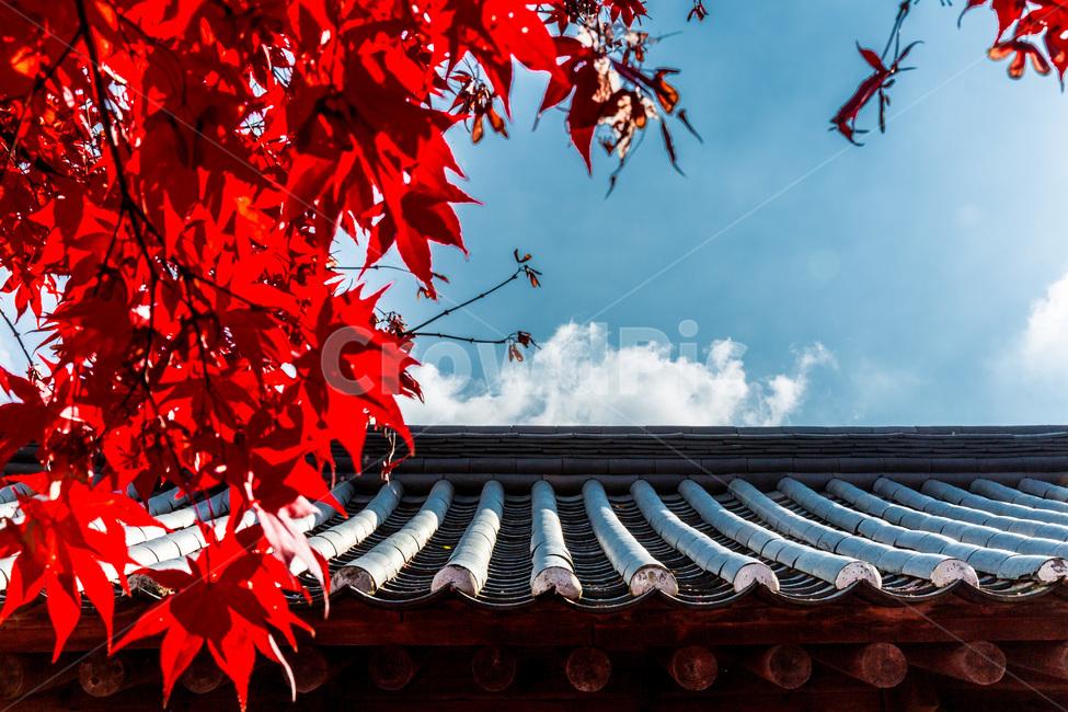 가을, 낙엽, 기와, 단풍, 서정