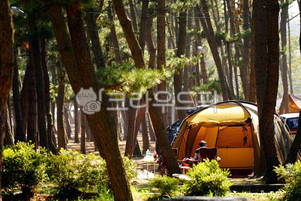 캠핑, 캠퍼, 자연, 숲, 소나무