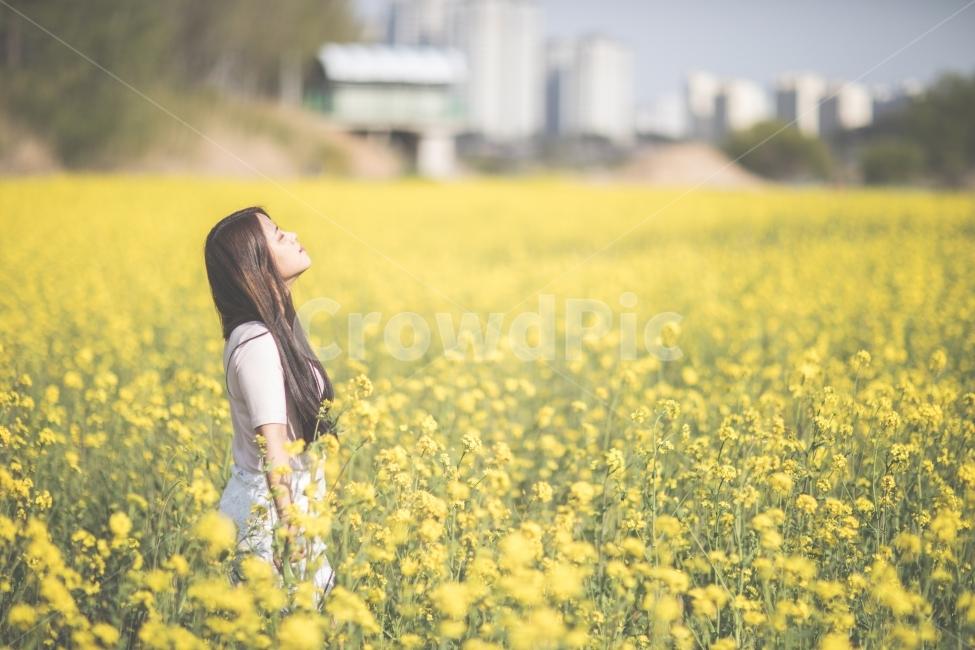 유채꽃, 꽃, 노랑, 사람, 여자
