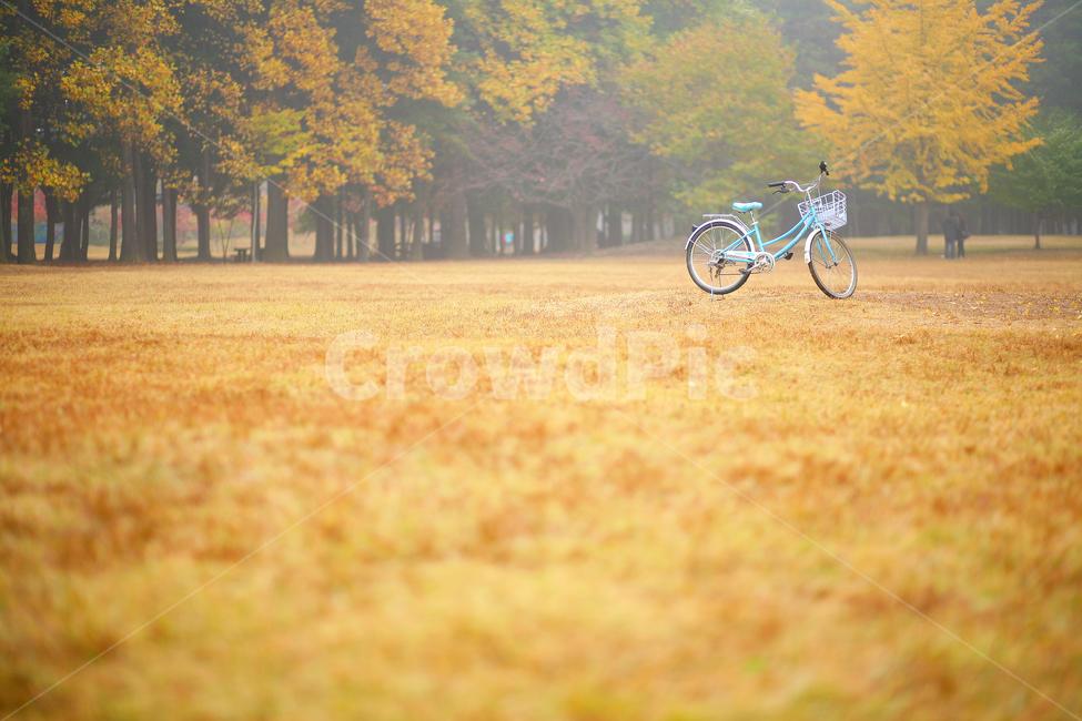 자전거, bicycle, 가을, 단풍, 은행나무