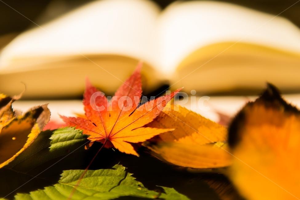 가을, 독서, 책, 나뭇잎, 단풍