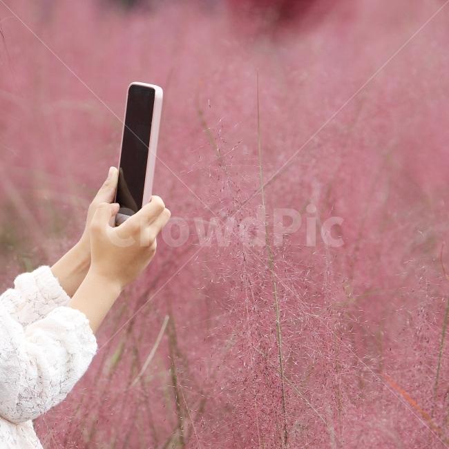 스마트폰, 사진찍는모습, 감성사진, 손, 핑크뮬리와스마트폰