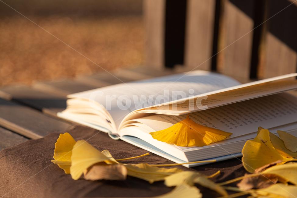 book, 책, plant, 식물, leaf