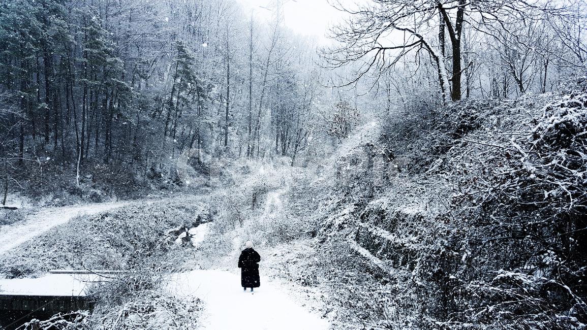 눈, 자연, 숲, 산, 식물