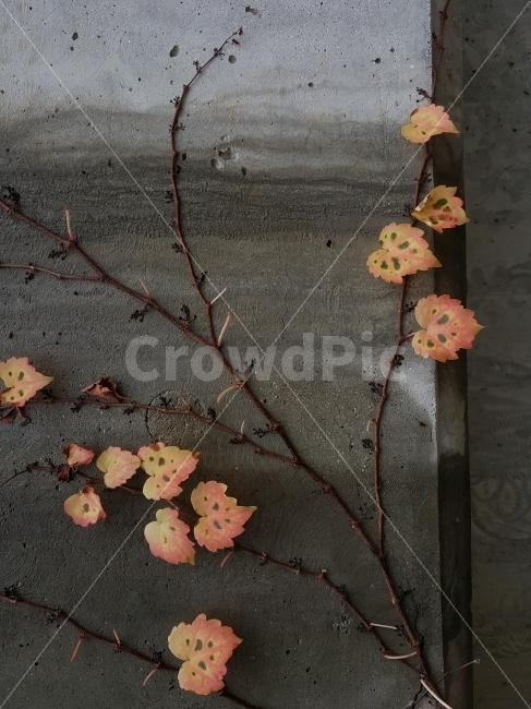 식물, 담쟁이, 담벼락, 벽, 색채