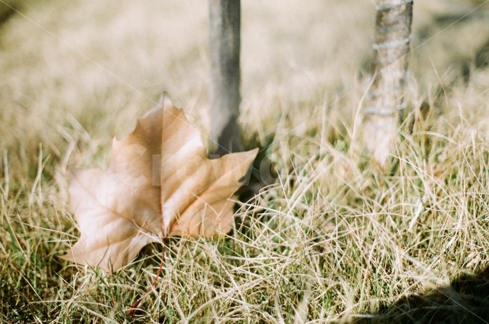가을, 낙엽, 필름사진, 감성사진, 정물사진