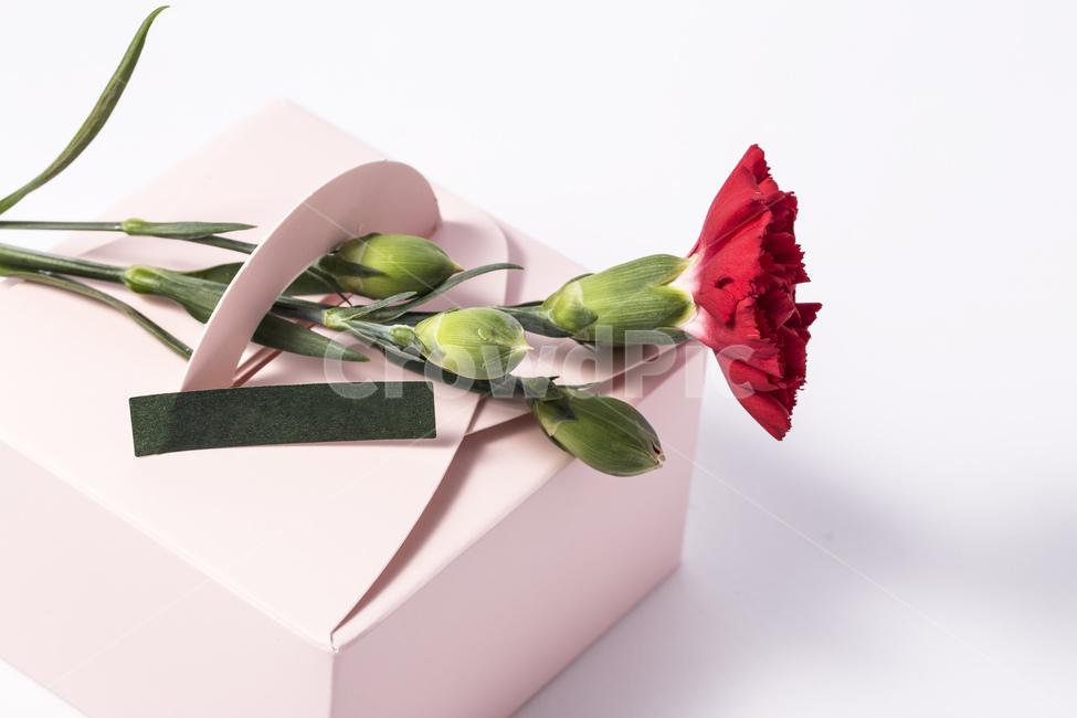 카네이션, 꽃, 플라워, 5월, 빨간색