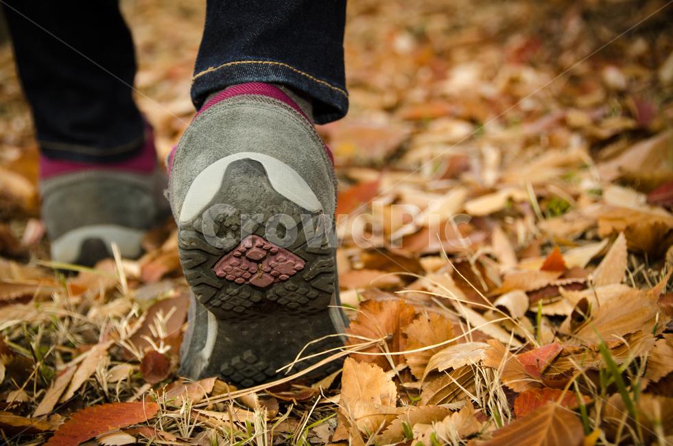 등산화, 등산, 가을, 하이킹, 자연