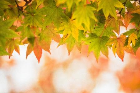 단풍-단풍나무-가을-단풍놀이-감성사진