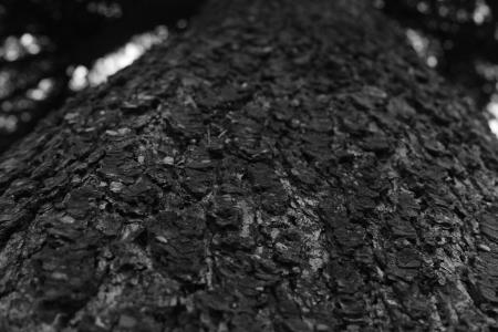 소나무-나무-표면-Texture-흑백