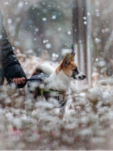 강아지-댕댕이-겨울-눈-반려견
