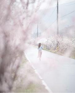 봄나들이-꽃길-비오는날-봄비-매화꽃