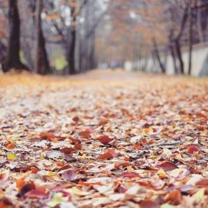 단풍-낙엽-가을-가로수길-홍유릉
