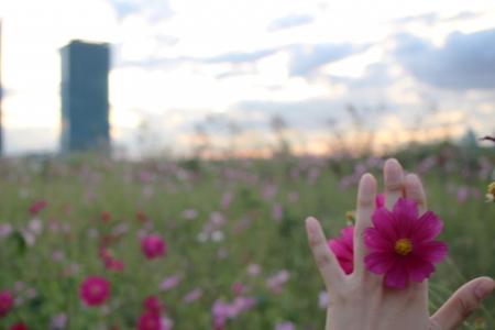 가을-코스모스-꽃반지-감성-소녀