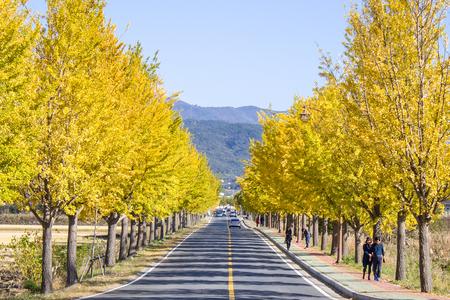 도로-road-은행-나무-단풍