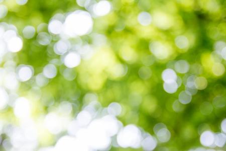 백그라운드-봄-보케-빛망울-봄빛