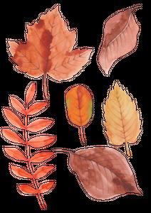 가을-시즌-일러스트레이션-계절-가을배경