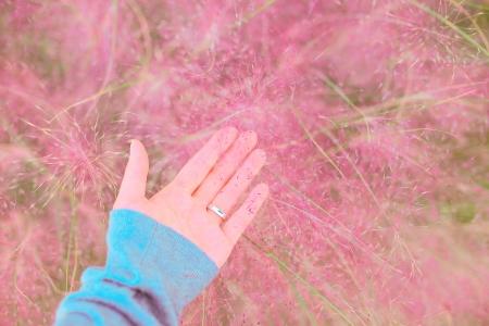 자연-꽃-꽃밭-핑크뮬리-억새