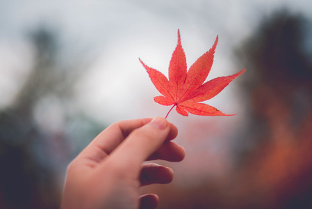 leaf-잎-plant-식물-tree
