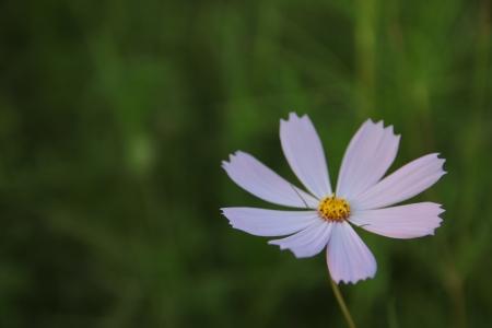꽃-접사-코스모스-자연-작은꽃