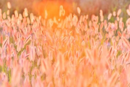 가을-가을배경-감성사진-수크령-노을