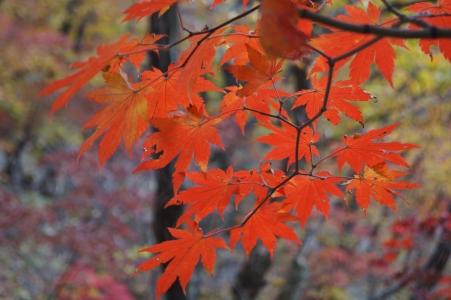 단풍-단풍나무-산-가을-가을산
