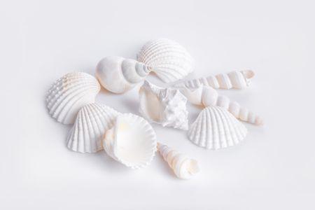 해양생물-해산물-수산물-조개껍질-조개껍데기