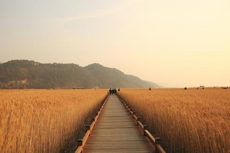 풍경사진-순천만습지-자연풍경-갈대-길