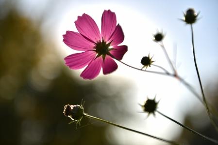 꽃-풍경-Nikon-D750-Artis