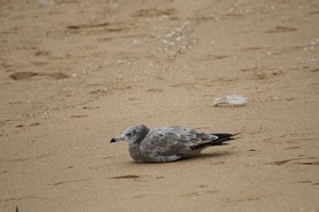 갈매기-바다-sea-beach-bird