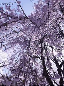 쏟아짐-행복-아름다움-빛-따뜻함